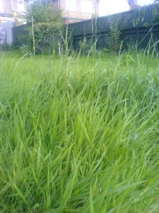 The Lawn - A Growing Problem